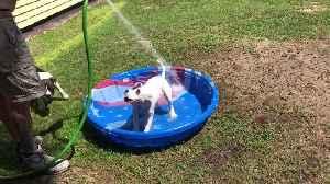 Dog Days Of Summer [Video]