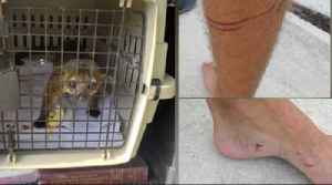 Lake Worth Beach resident bitten by kinkajou, officers capture animal in bathroom [Video]