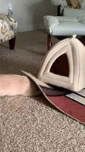 Cat Tries to Hide Under Area Rug [Video]