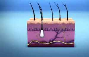 Scientists discover new pain-sensing organ in the skin [Video]