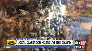 Bee colony inside classroom teaches kids environment protection [Video]