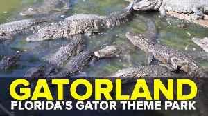 Gatorland: Florida's alligator theme park | Taste and See Tampa Bay [Video]