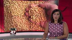 2. Japanese buyers visit Charlotte soybean farm [Video]