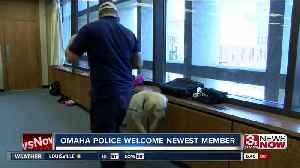 'Peace' OPD's Newest Dog [Video]