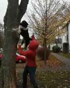 Dog Jumps on Owner's Back and Climbs Tree to Fetch Stick [Video]
