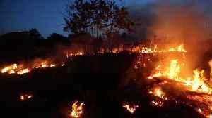 Amazon rainforest ravaged by deforestation fires in Brazil [Video]