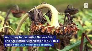 Half a Billion Bees Dead in Brazil Due to Pesticide Use [Video]