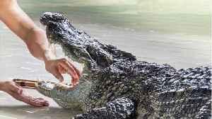 Fidel Castro's Crocodile Bites Man At A Party [Video]