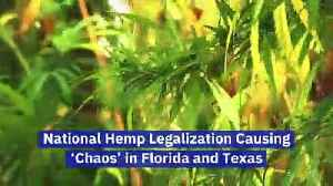 National Hemp Legalization Causing 'Chaos' in Florida and Texas [Video]