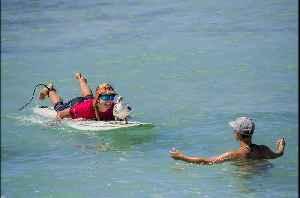 Dog with cancer surfs at Duke's OceanFest [Video]