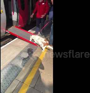 UK train conductor sets up ramp to help short-legged dog board train [Video]