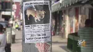 Search Continues For Dog Grabbed Outside Brooklyn Store [Video]