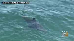 Shark Spotted In Long Island Waters [Video]