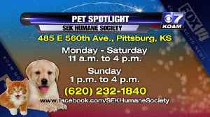 Pet Spotlight 8-21 [Video]