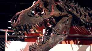 This One Change On Earth Helped In Giving Rise To Dinosaurs: Study [Video]