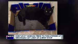 SEARCH FOR OWNER: Lost cat found in Kentucky believed to belong to Michigan woman [Video]
