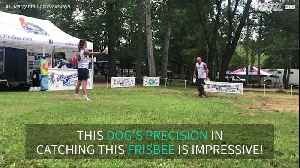 Frisbee team and dog execute fantastic 'Bottle Cap Challenge' [Video]