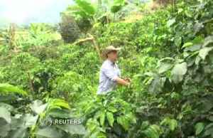 Colombia coffee growers' new nemesis: machines [Video]