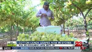 Cotton Candy Grapes are now in stores, and they are selling fast [Video]