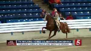 Animal rights activists urge people to boycott Tennessee Walking Horse Celebration [Video]