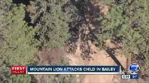 Mountain lion attacks child in Bailey [Video]