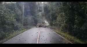News video: Adorable moment sleeping elephant blocks entire road in Thailand