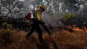 Wildfires In The Amazon Are Uniquely Difficult To Fight [Video]