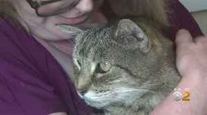 Family Reunited With Lost Cat After 11 Years [Video]
