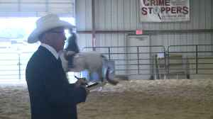 More than 50 ponies featured in WPAOC Pony Show [Video]