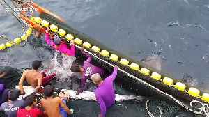 Fishermen save endangered whale shark trapped in trawler's net [Video]