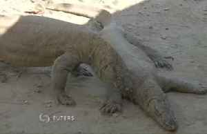 Villagers lose out in plan to save Komodo dragon [Video]