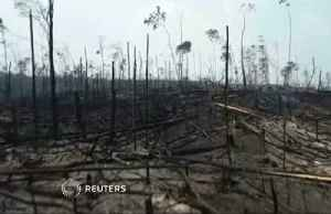 Drone footage reveals desolation of Amazon fires [Video]