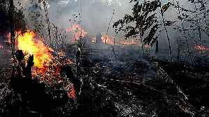 Amazon fires: Rainforest destruction at record high [Video]