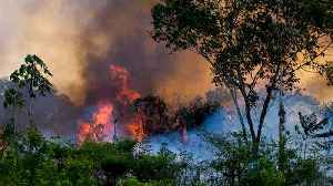 Brazil's Amazon fires could cause disastrous climate change impact [Video]