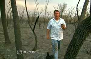 Vet saves animals, sounds alarm over Bolivian wildfires [Video]
