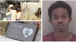 'I Snapped': Man Pleads Guilty to Killing Tommie the Dog [Video]