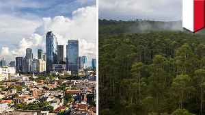 Indonesia plans to relocate capital city to Borneo island [Video]