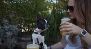 How to spend the day in Cleveland with your dog: an itinerary [Video]