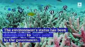 Australia's Great Barrier Reef Is in Big Trouble [Video]
