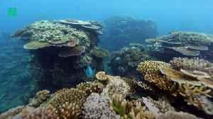 "Australia's Great Barrier Reef Long-Term Outlook ""Very Poor"" [Video]"