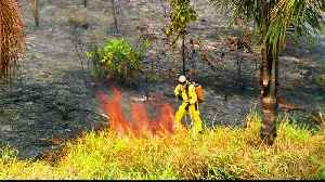 News video: Amazon fires: burning continues despite ban