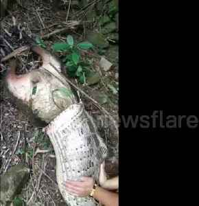 Python regurgitates farmer's 40 kg goat in China's Anxi county [Video]