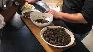 South Africans get the bug: Cape Town eatery serves insect-only meals [Video]