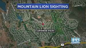 Mountain lion Sighting In Cameron Park [Video]