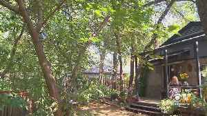 Arlington Neighborhood Concerned About Losing Trees To Restoration Project [Video]