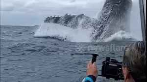 Incredible moment huge humpback whale breaches in front of tourists off Tonga [Video]