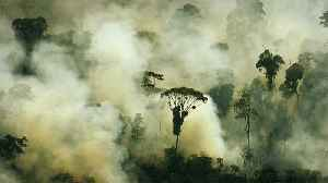 No, the Amazon Rainforest Doesn't Produce 20% of Our Oxygen, Here's Why [Video]