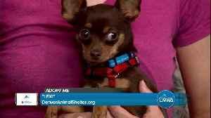 Denver Animal Shelter- Bark and Recreation [Video]