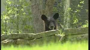Woman Dies In Black Bear Attack [Video]