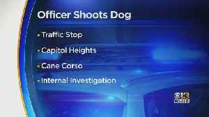Prince George's County Police Officer Shoots, Kills Dog After Reportedly Being Attacked During Traffic Stop [Video]